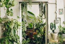 Plants & Deco