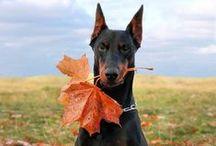 C'est l'automne / Camouflage ou pas, on aime ça !