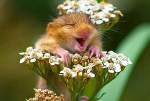 All About That Hamster Life / I just got a hamster and I'm using Pinterest to foster my new obsession. I know that no one will follow this board but I don't care because they are just sad, lonely, hamster-less hamster-haters! / by Aubrey Turney