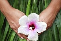 Hawaiian Vibes / Discovering the beauty and adventure of Hawaii - where our organic Hawaiian Oana Turmeric is grown and hand-harvested by family farmers.