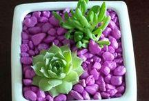 | Flores e Plantas |