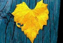 Amarelo | Yellow / ... Yellow Yellow Yellow Yellow...Amarelo, uma das cores mais vibrantes da vida, remete a frescor, alegria, energia em muitas versões. Delicie-se!
