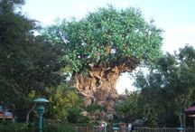 Disney Parks: Animal Kingdom