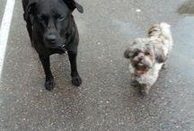 My dogs / Men kjærlighet gir jeg til Cenza og Charmi. To herlige hunder.