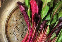 Kitchen garden recipes / by Katriina Anttila