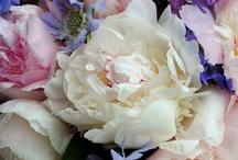 Flowers I / by Флорибунда: Цветы и Жизнь