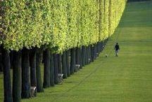 #Gardens#design / Gardens at home