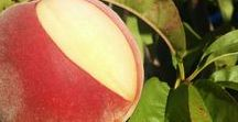 Peach Trees & Their Fruit / Learn how to care for peach trees, their different varieties and what to do with your bountiful harvests + other clever tricks.