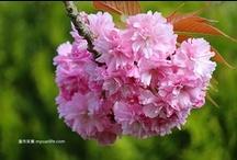 Van Flower 彩花大道