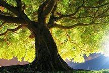 Tree / Alberi dipinti e fotografati