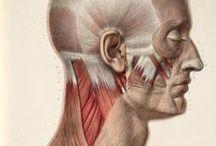 Materials: Head, Face