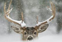 GL | Oh Deer