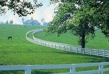 My Kentucky.....love it! / There is so much to love about the people and culture of Kentucky.