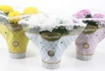 Mangoa Floral / Branding van sierteeltproducten, van conceptontwikkeling tot verpakkingsontwerp en promotie.