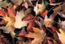 Seizoen: Herfst (bos)