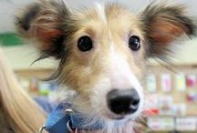 Adoption Events / Adopt today! Natural Pawz has weekend adoption events every weekend at most store locations!
