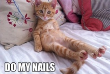 Silly Pets!! / All the funny happenings around pets :)