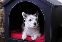 Pet Ideas & Furniture! / DIY PET :)