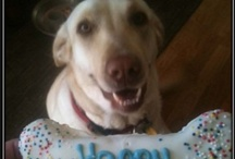 Natural Pawz Birthdays! / Send us a picture of your dog and their birthday treats!!