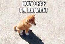 Cute & Funny stuff
