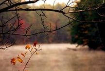 Atarassia. / « O natura, o natura, perché non rendi poi quel che prometti allor? » G. Leopardi