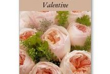 Valentines Day / Cards and gifts for Valentines Day