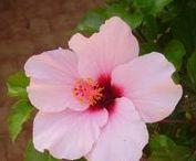 Kert - Garden / Növények ápolása.... kertrendezés, kerti bútor....