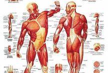 Træning og motion