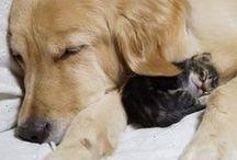 Lemmikit / Eläinvakuutus takaa koirallesi, kissallesi tai hevosellesi parhaan mahdollisen hoidon, jos se sairastuu tai sille sattuu tapaturma. Hyvää turvaa kaikenkarvaisille ystäville - tutustu lisää: www.lahitapiola.fi/elaimet.