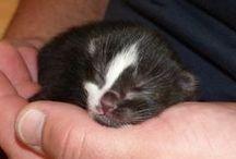 Lottes Babies / Lottes erster und zweiter Wurf. Süße Kätzchen!