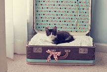 ☆ LES PLUS BEAUX CHATS DE PINTEREST ☆ / Notre ambition ? Créer le plus beau tableau des plus beaux chats de Pinterest ! Aidez-nous en nous envoyant vos photos par message privé !