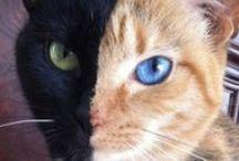 Photos du Blog de Cat Apart