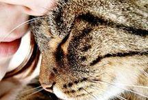 Nos chats et nous / Ils sont nos confidents, nos meilleurs amis, nos compagnons de toujours... Nos chats nous accompagnent dans toutes les étapes de notre vie, des plus belles aux plus difficiles ♥