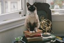 Design et chats / Des appartements magnifiques avec des chats encore plus beaux dedans... La vie de rêve citadine pour nos félins préférés !