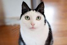 Des chats au pelage incroyable ! / Après leur personnalité et leur race, le pelage des chats est ce qui les rend uniques. Découvrez ici d'étonnants pelages et marques : taches mouchetées, fausses moustaches, double-faces, motifs de cœurs et bien d'autres encore !