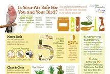 Pet Bird Care / Sharing Information and Tips on Caring for Pet Birds
