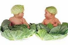 Anne Geddes Photography / Sharing the baby photography of Anne Geddes MNZM (New Zealand Order of Merit) (1956 - ), an Australian-born photographer, currently living and working in New York. Her books have been published in 83 countries