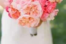 Wedding Dreams / by Molly Smarr