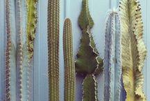 NOUBIA GROW / floral, botanical, green, natural, tribal