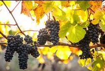 Vineyard Rentals / Find the vacation home of your dreams on a beautiful, sprawling vineyard! / by FlipKey.com
