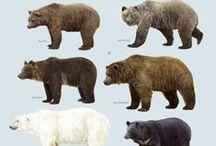 Bears / Black Bears, Brown Bears, Koalas, Panda Bears, Polar Bears, Stuffed Bears, Big bears, Small bears, ALL BEARS!