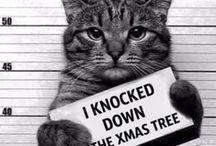 CATS / meaooowwww