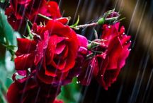 Raindrops-N-Roses / Don't wait for the storm to pass...learn to dance in the rain! / by Glenda Sexton