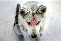 occhi gialli e non solo / Felini, rapaci e qualunque altro animale mi piaccia.
