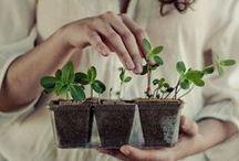 PLANTS + FLORALS / Plants, flowers, gardens and farms