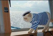 Животные и море / животные на море