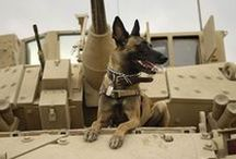 Military Dogs / 4 Legged Heros