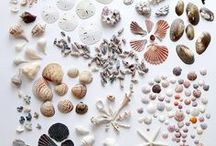 Sea Treasures: A Collection of Glass, Driftwood, Shells and Such / Washed up along the coastal shores of continents, a bounty of sea glass, driftwood and shells to be found! This pin board collection celebrates the craftsmanship and hands-on approach from artisans all around, turning polished rock and water logged branches in to works of art!