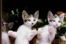 Every life needs atleast nine cats / I love cats, both my own and all others:)