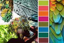 color & shape palette